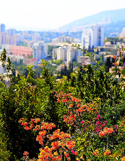 Colorful Wildflowers, Haifa
