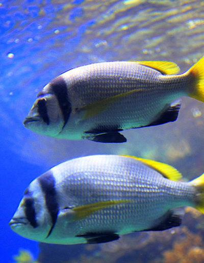 Flashy Fish, Eilat
