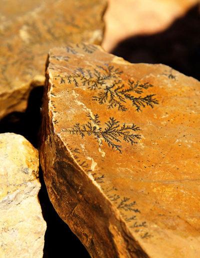 Fossil Rocks, Mitzpe Ramon